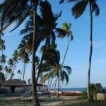Jambiani palm